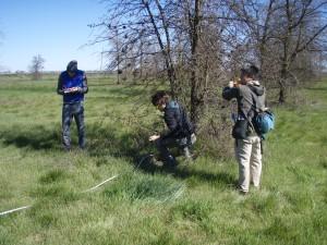 Tree measuring crew at work!