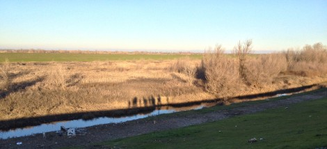 shadows_wetland